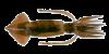 Argentine-shortfin-squid.png
